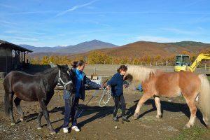 Sezione equitazione di Area Tarolli