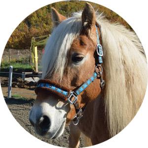 Ippoterapia, equitazione e pet-terapy